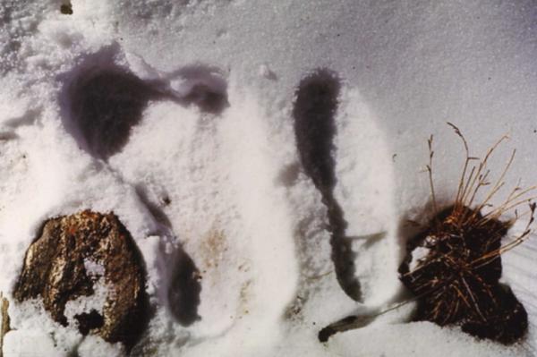 Yeti Footprint, Image Credit : Wikimedia Commons