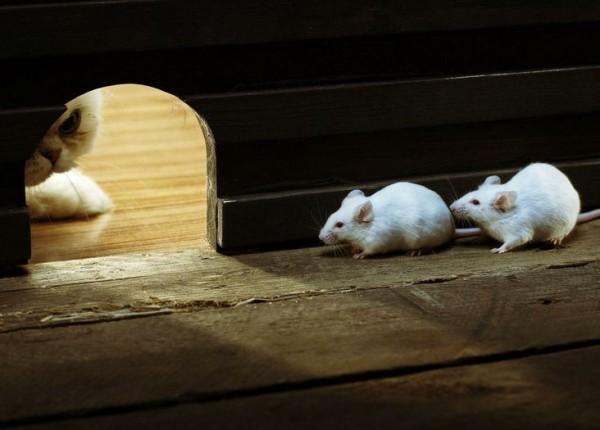 Restoring Vision In Blind Mice