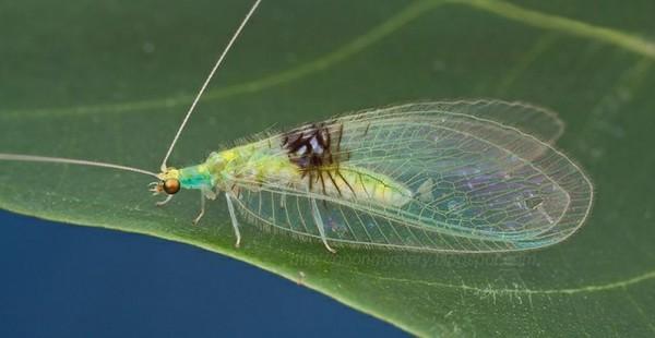 Unknown Species Found In Flickr