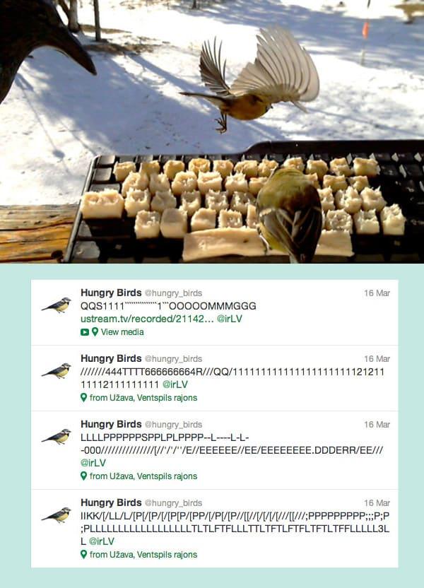Bird tweets
