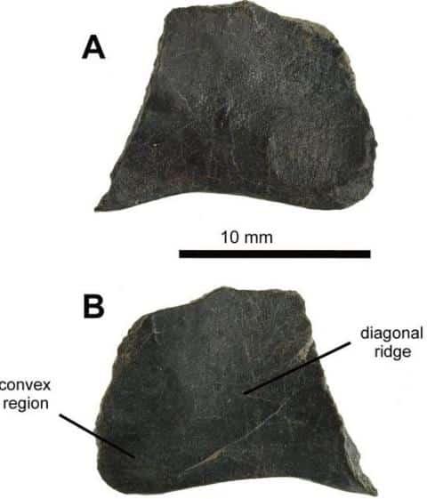 115 Million Year Old Fossils Of Flying Dinosaur, Pterosaur-3