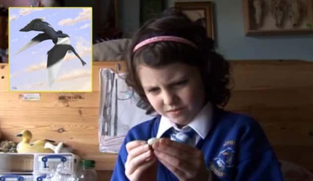Dinosaur Hunter Daisy Morris