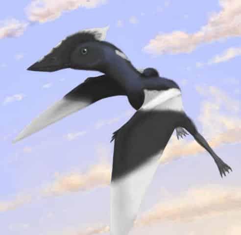 Flying Dinosaur, Pterosaur-1