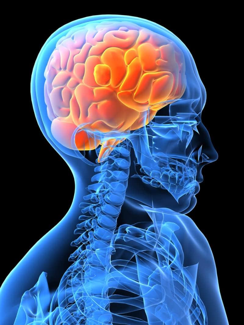 Autistic Brain Development