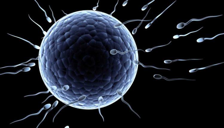 Sperm Race