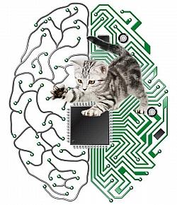 IBM Cognitive Computing Project