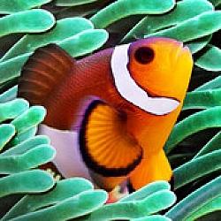 Colorful Aquarium – Premium Entertainment App For iOS [Free]