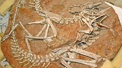 18 Stolen Dinosaur Skeletons Returned To Mongolia